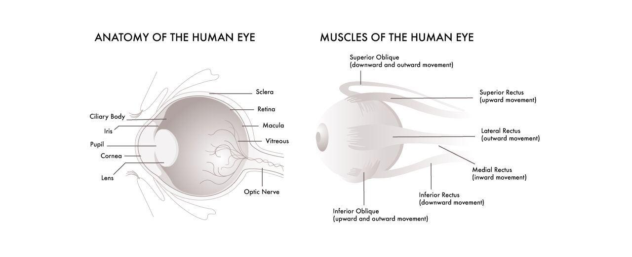 Glassesgallery lens info image - Pic